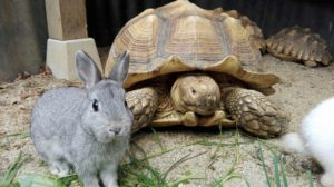 ウサギとカメの写真